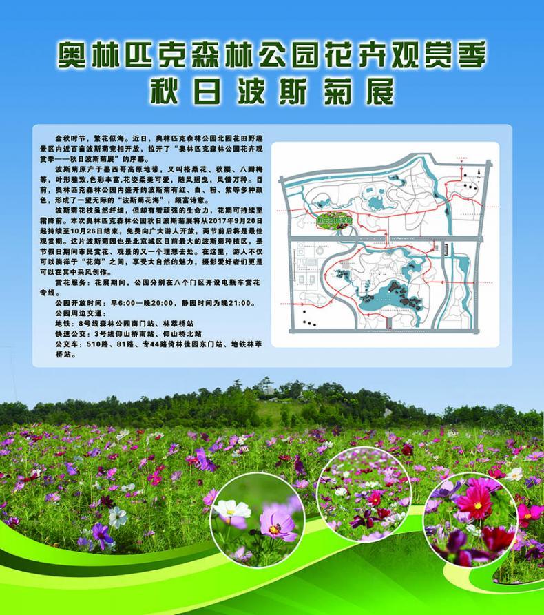 奥林匹克森林公园花卉观赏季——秋日波斯菊展