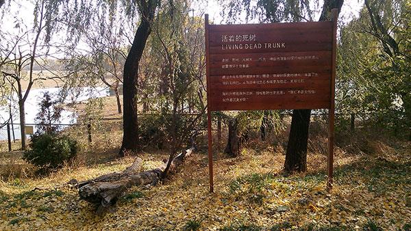 26活着的死树