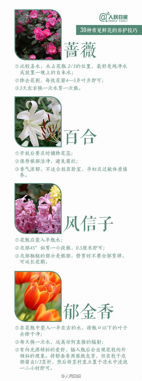 30种鲜花养护技巧 每种3句话告诉你