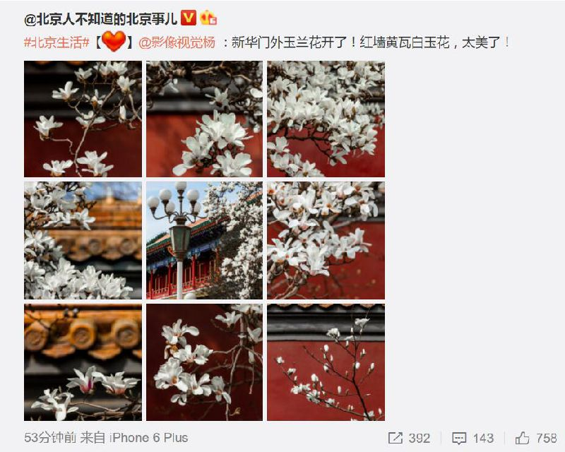 北京早春赏花游玩的地方全攻略 请收下这份深情的邀请函