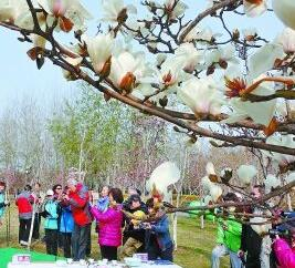 雕塑公园玉兰花节
