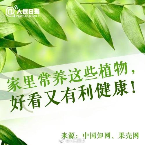 17种适合家养的植物和养护方法↓↓好看又有利于家人健康!