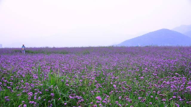 北京周边赏花去处推荐 秋季也能看花海
