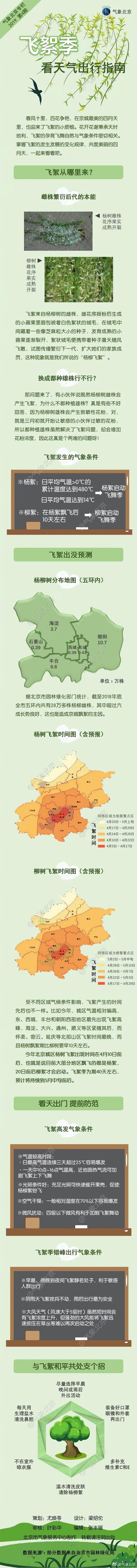 北京飞絮季节出行防护指南