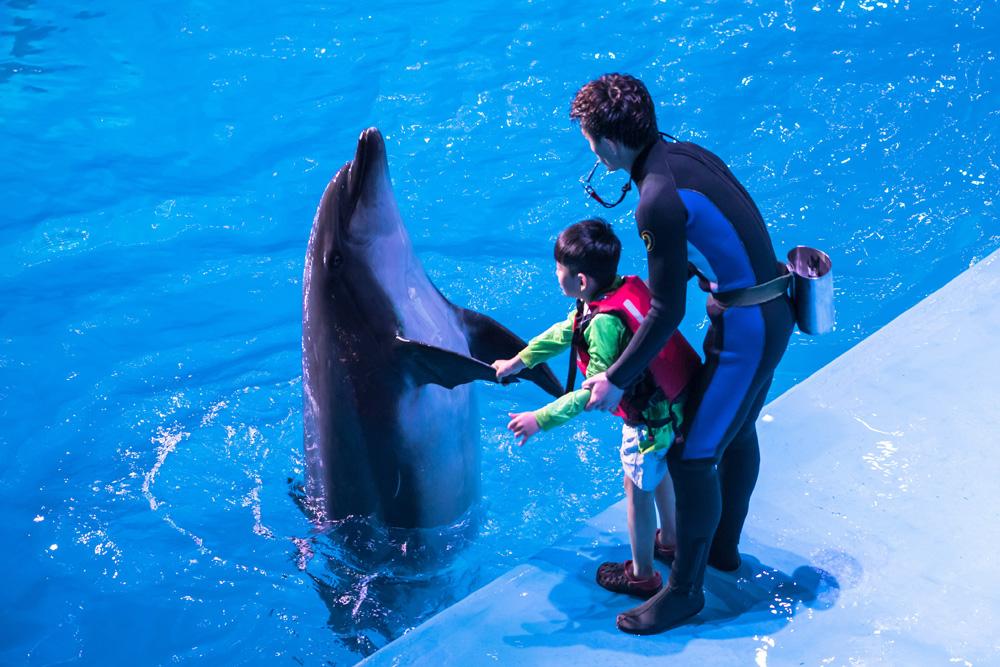 【老虎滩海洋公园】拥有全国最长的大型跨海空中索道、侏罗纪激流探险、海滨观光船......