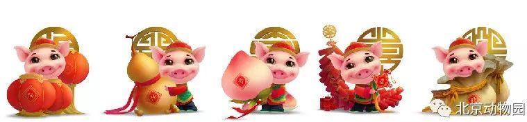 2019北京动物园猪年生肖文化活动