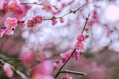 2019北京中山公园第八届梅兰文化节(时间+看点+门票)