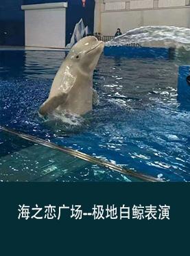 2017长春海之恋广场极地白鲸表演(门票+地点+时间)