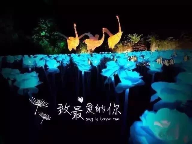 2017双流玫瑰花海灯光节攻略(时间+地点+门票)