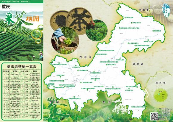 重庆采茶地图出炉 标注全市32处茶叶采摘地