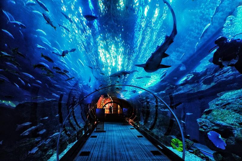 重庆海洋公园开园特价票