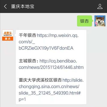 重庆六大最美银杏观赏地盘点 重庆去哪里看银杏