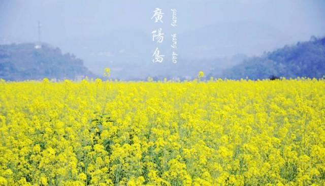 重庆广阳岛油菜花节