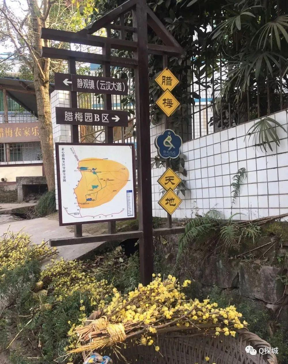 2019重庆梅花观赏地图 来看看哪个离你最近