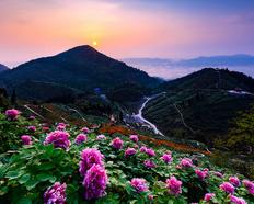2019重庆垫江华夏牡丹园游玩攻略