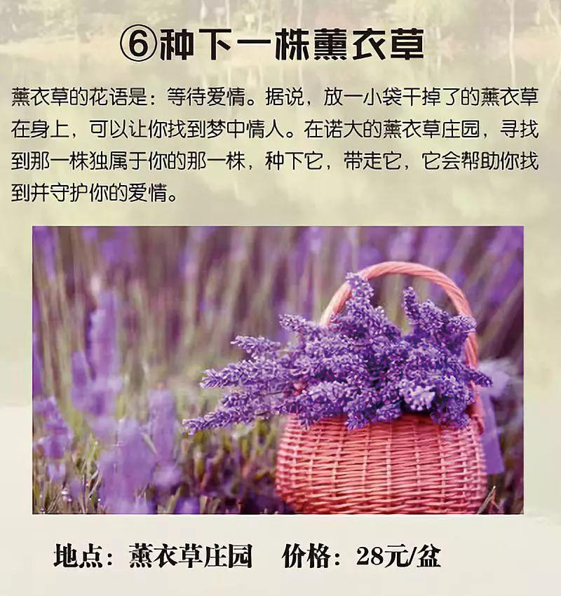 2019年长沙县慧润板仓国际露营基地春节优惠活动