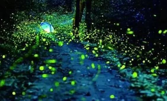 常州周边能看萤火虫的地方