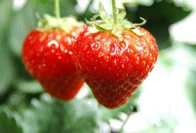 大望村草莓园39.9元特惠
