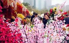 2019东莞南城迎春花市(时间+地点+平面图)
