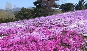 2019大连英歌石赏花攻略