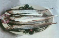 黄河刀口鱼