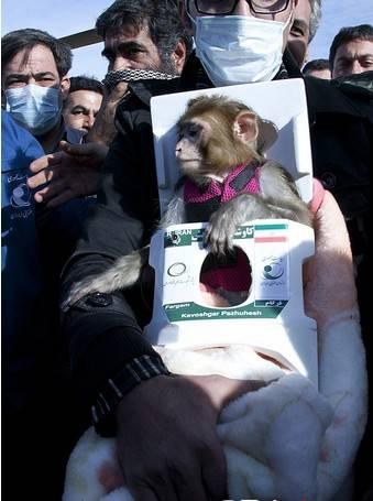 伊朗再送活猴进入太空后返回被指虐待动物