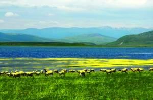 甘南尕海。