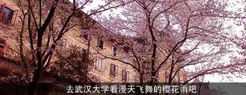 武汉大学赏樱花全攻略