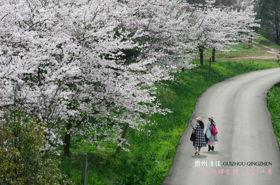 红枫湖风景区万亩樱花在哪里?红枫湖樱花什么时候开?
