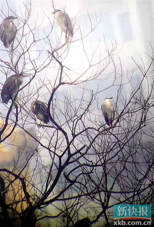 春天到哪观鸟? 广州公布五大观鸟胜地
