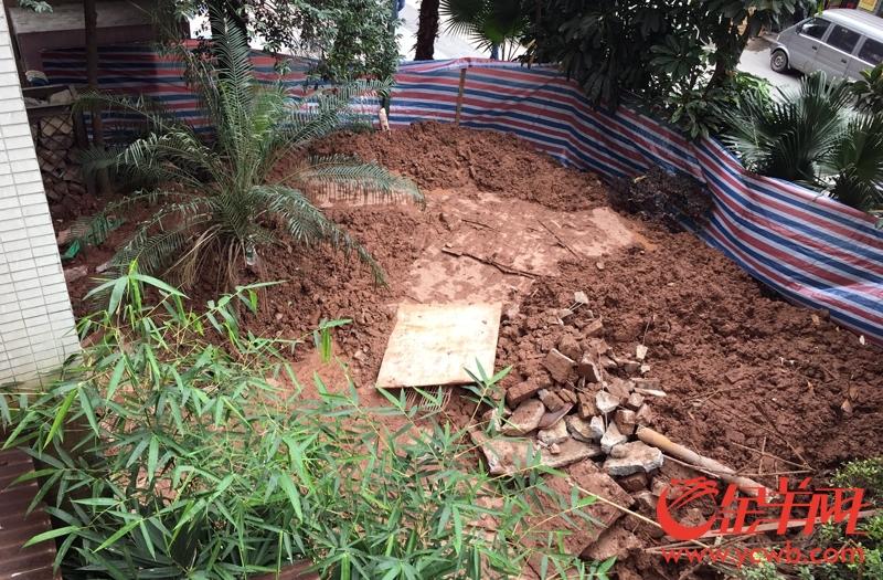 涉事房屋外的绿化带,堆满挖出来的余泥 梁怿韬 摄12.jpg