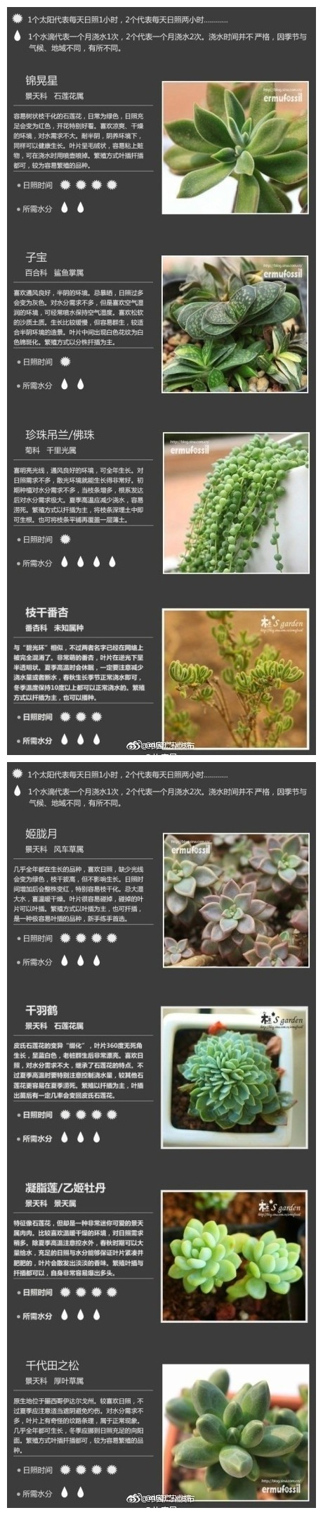多肉植物怎么养?36种常见多肉植物种植攻略一览