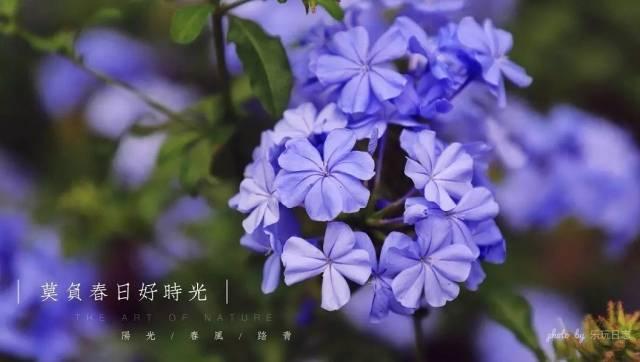 2018广州百万葵园520活动:2大2小套票仅131.4元