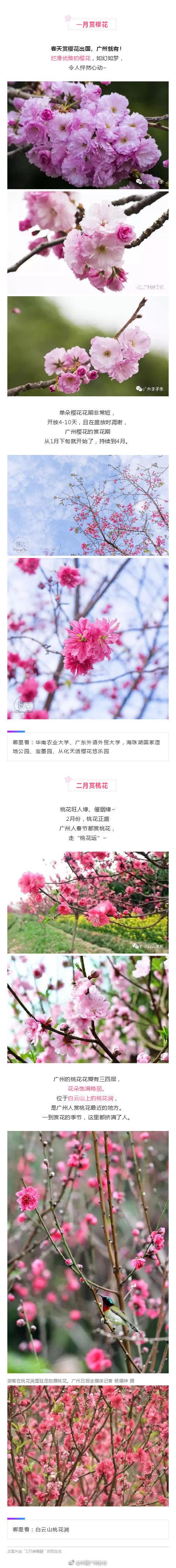 2019广州赏花攻略 全年赏花时间及地点一览