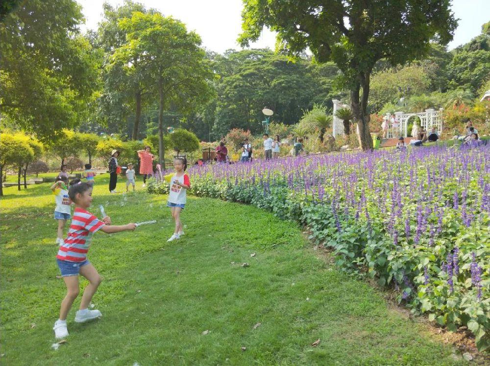 广州白云山有什么好玩的?2019年6月白云山有什么花