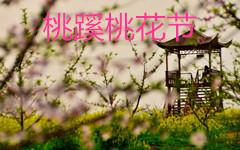 2017中国合肥三十岗桃花节时间、地点、门票