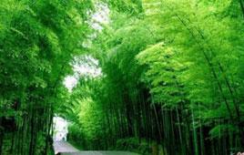 台州避暑旅游