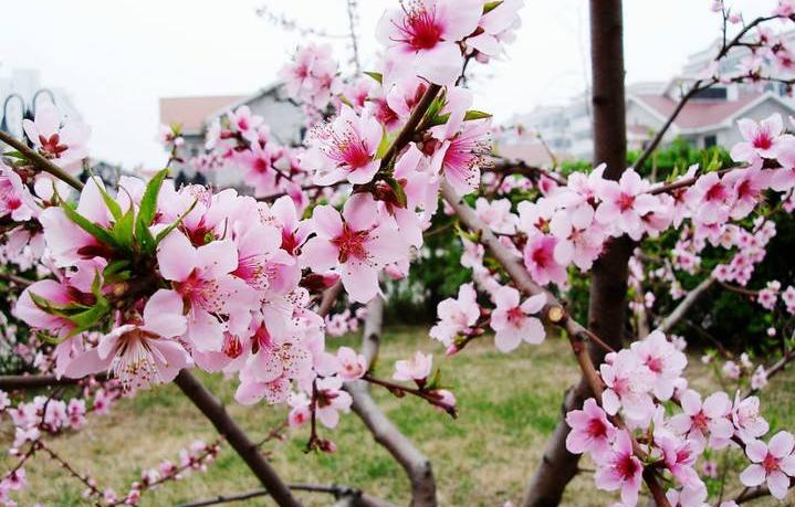 呼和浩特4月起赏花攻略