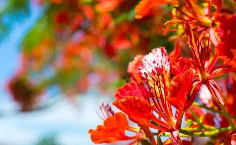 五一惠州去哪儿赏花?