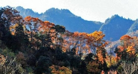 光雾山桃园景区红叶景色一览