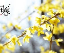 北京清明节赏花踏青活动一览