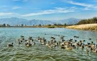 延庆野鸭湖湿地公园好玩吗