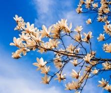 卧佛寺春季赏花