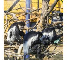 济南野生动物世界