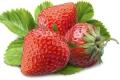 新农姚家山草莓基地摘草莓全攻略