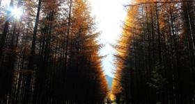 光雾山最美红叶区 十八月潭游玩路线一览