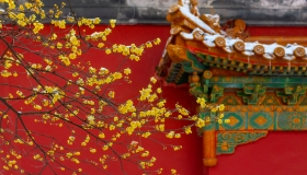 南京冬季赏花