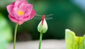 南京夏季赏花