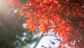 南京秋季赏花