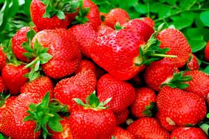 武汉摘草莓的地方盘点(最新最全)